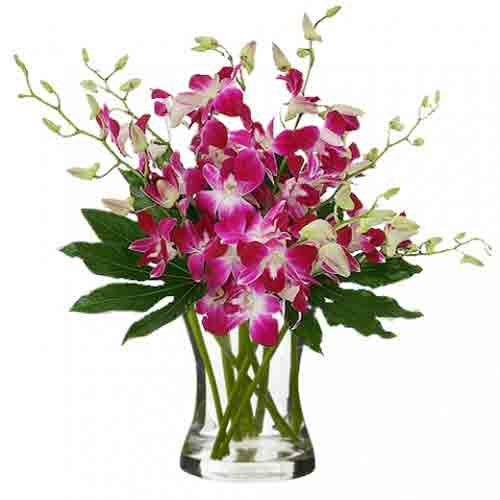 Cherished Bundle of 20 Stems of Purple Orchids N Canada Leaves