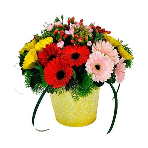 Fashionable Splash of Happiness Gerberas in a Pot