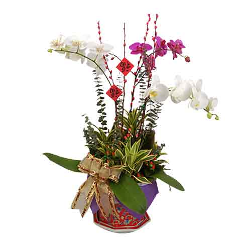 Silky Festive Gift of Phalaenopsis Orchids in Nyonya Porcelain Pot